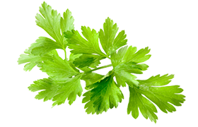 Cilantro topping icon